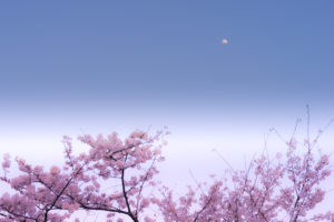 asamipicturestoreにほんいろ-colors of Japan-